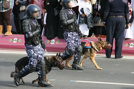 Militarry dog handlers